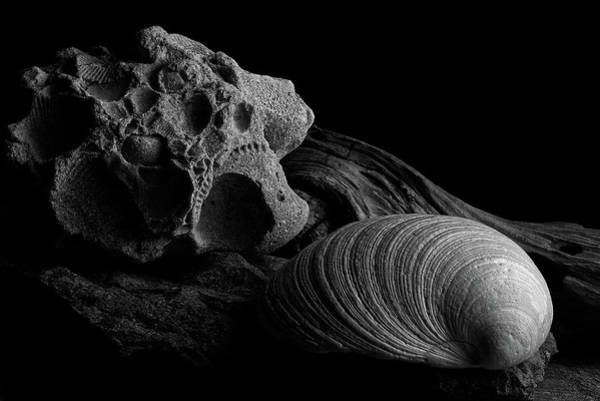 Photograph - Fossil And Shell by Richard Rizzo