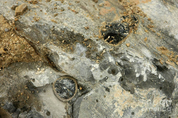 Photograph - Fossils In Italy by Liz Alderdice