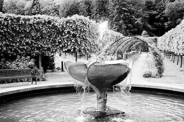 Wall Art - Photograph - fountain in the centre of victorian Bangor Castle walled garden by Joe Fox