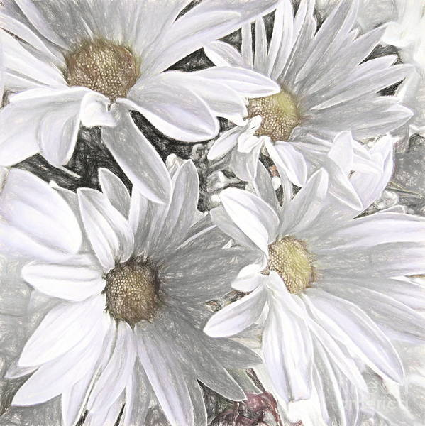 Simple Life Mixed Media - Four Daisies by Susan Lafleur