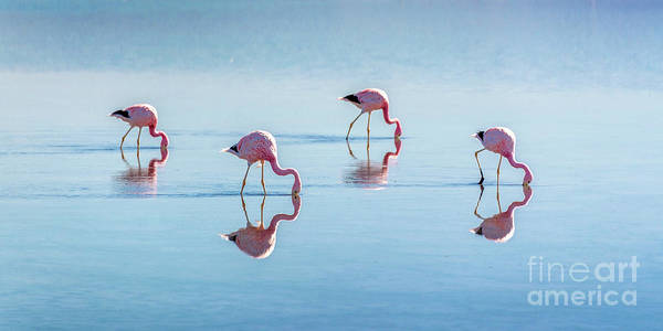 Wall Art - Photograph - Four Flamingos by Delphimages Photo Creations