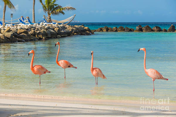 Wall Art - Photograph - Four Flamingos On The Beach by Masterphoto