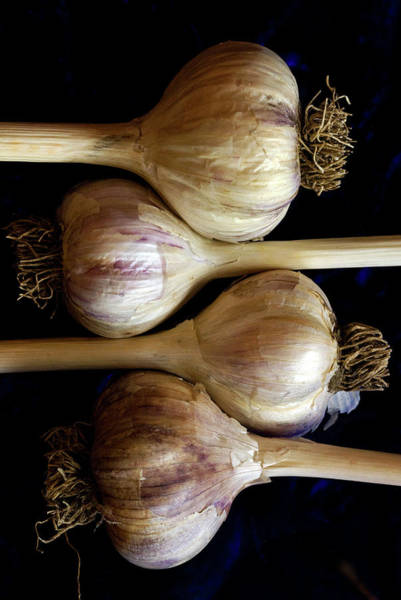 Texas A Photograph - Four Garlic Heads With Stems And Roots by Rebecca E Marvil