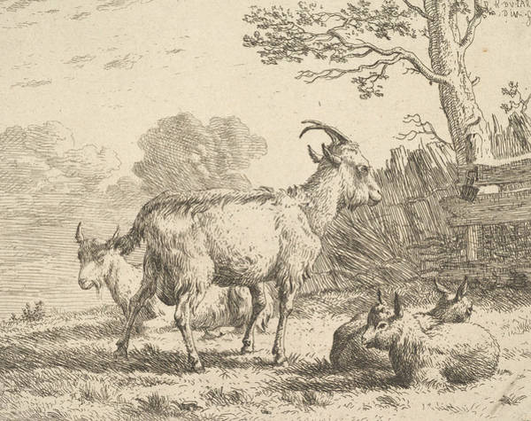 Wall Art - Relief - Four Goats, At The Back A Nanny Goat Lies On The Ground, In The Middle A Billy Goat Stands, In The F by Karel Dujardin