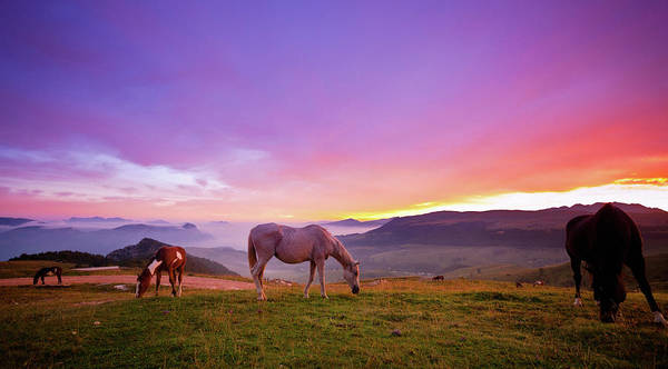 Photograph - Four Horses Grazing On The Grass At by Moreiso