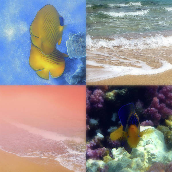 Photograph - Four Image Photo Collage With Seashore And Sealife by Johanna Hurmerinta