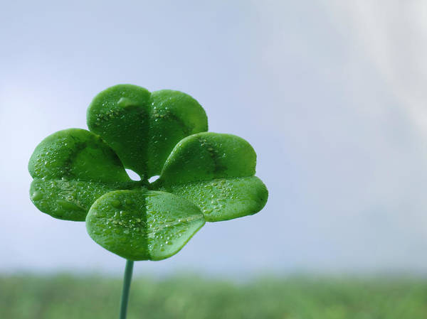 Four Leaf Clover Photograph - Four-leaf Clover On Field, Close Up by Jonathan Knowles