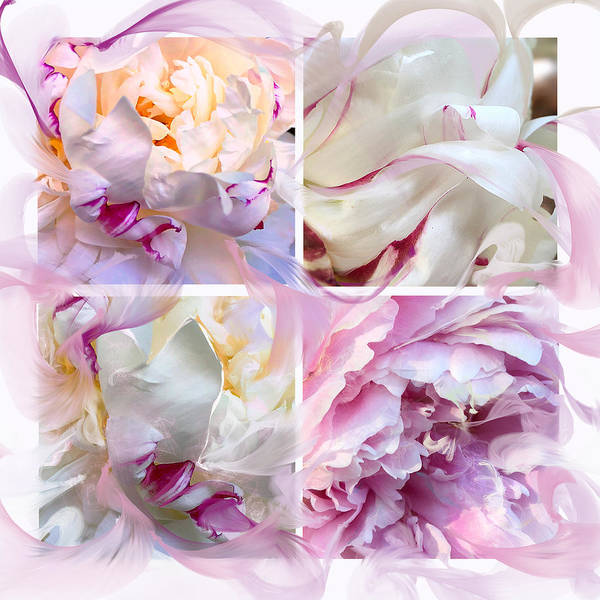 Digital Art - Four Peonies  by Cindy Greenstein