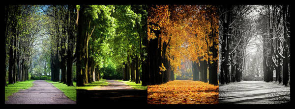 Season Photograph - Four Seasons by Sören Lubitz Photography