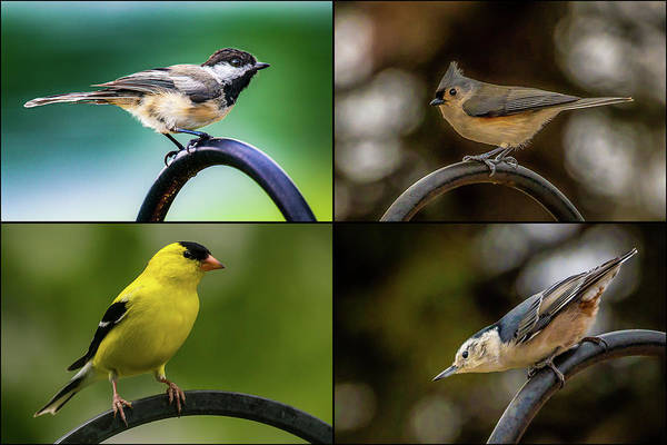 Photograph - Four Song Birds by Onyonet  Photo Studios
