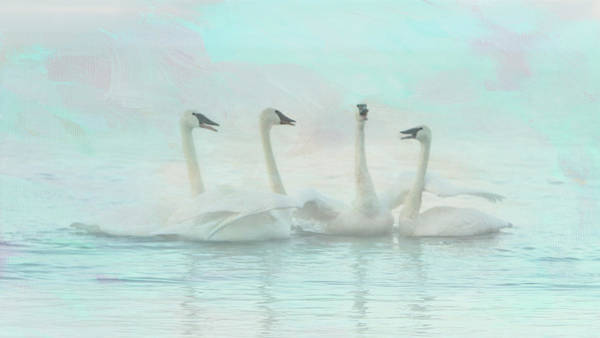 Photograph - Four Swans Watercolor Group by Patti Deters