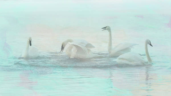 Photograph - Four Swans Watercolor Group Play by Patti Deters