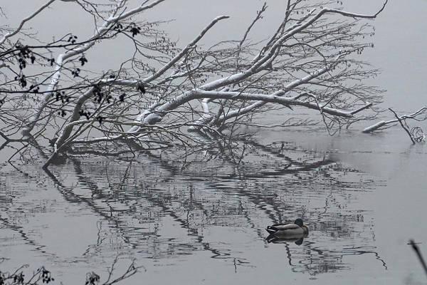 Wall Art - Photograph - Fowl Winter Day by Brandy Herren