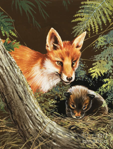 Wall Art - Painting - Fox And Fox Cub by Unknown