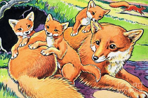 Wall Art - Painting - Fox And Her Cubs by Harry M Pettit