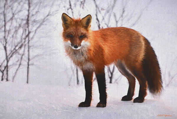 Painting - Fox In The Snow 588 - Painted by Ericamaxine Price