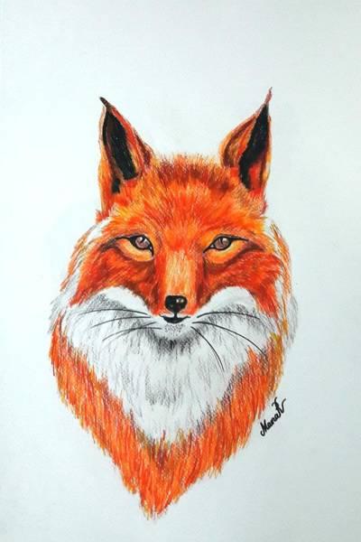 Drawing - Fox by Manar Hawsawi
