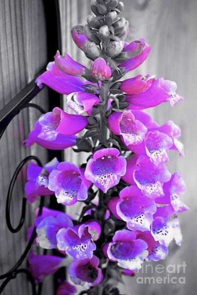 Photograph - Foxglove by Patti Whitten
