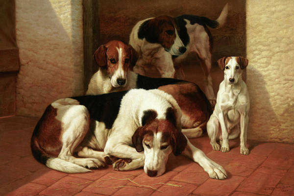 Fox Terrier Wall Art - Painting - Foxhounds And A Terrier by Edward Algernon Stuart Douglas