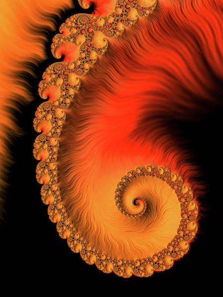 Wall Art - Digital Art - Fractal Spiral Art Orange Red And Black by Matthias Hauser