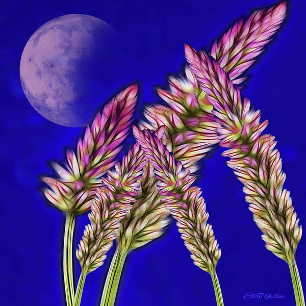 Photograph - Fractal Wheat Under The Moon by Ericamaxine Price