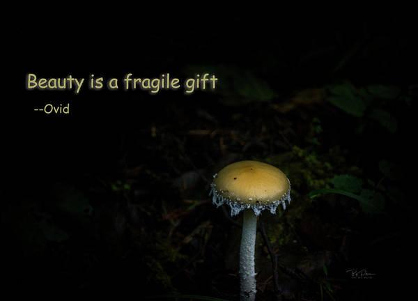Photograph - Fragile Mushroom by Bill Posner