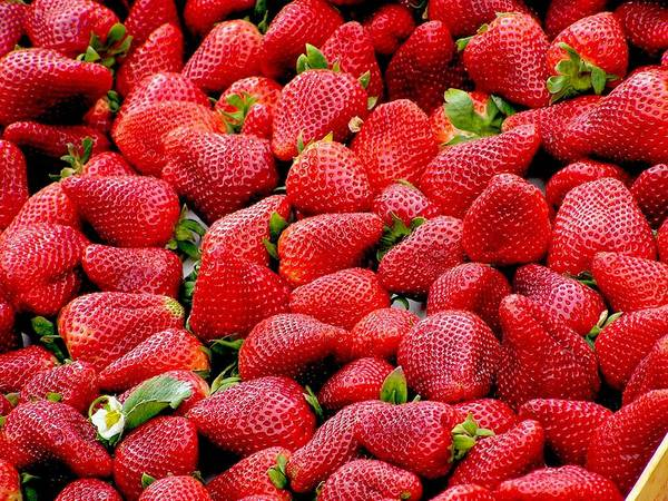 Photograph - Fraises by Top Wallpapers