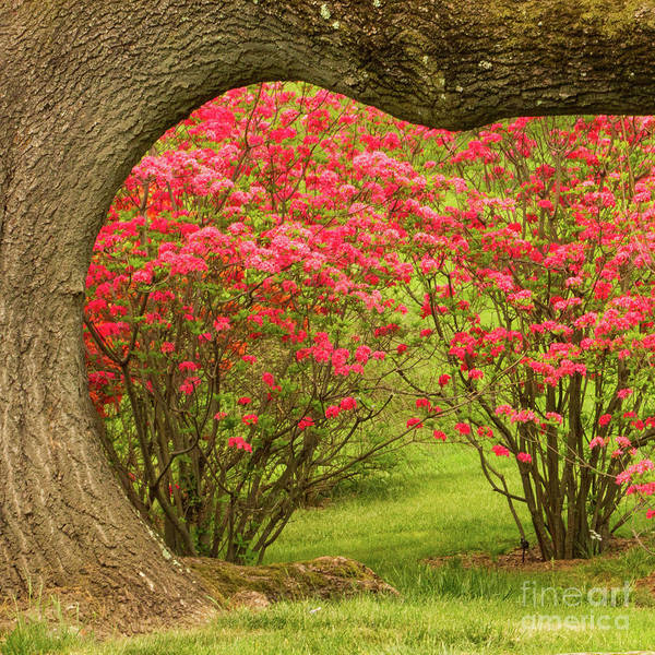 Photograph - Framing Spring by Marilyn Cornwell