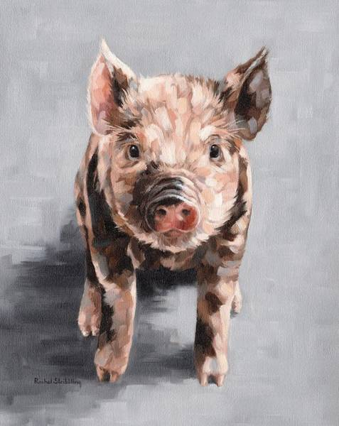 Alla Prima Painting - Frankie by Rachel Stribbling