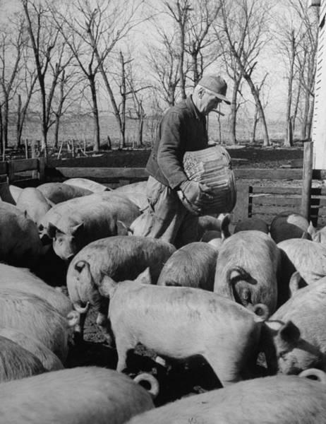 Pigpens Photograph - Fred Bruene by Gordon Parks