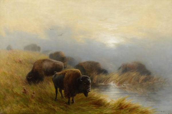 Wall Art - Painting - Frederick A. Verner  1836-1928 Grazing Buffalo  1905  by Celestial Images
