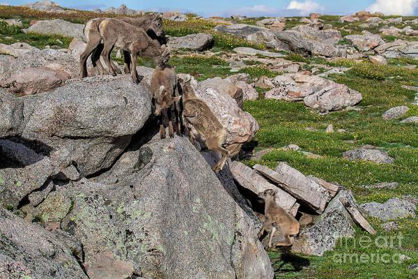 Photograph - Free Climbing by Jim Garrison