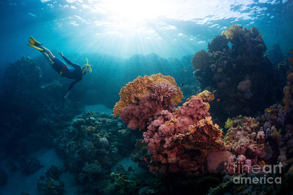 Wall Art - Photograph - Free Diver Exploring Vivid Coral Reef by Dudarev Mikhail