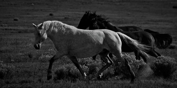 Photograph - Freedom by Catherine Sobredo