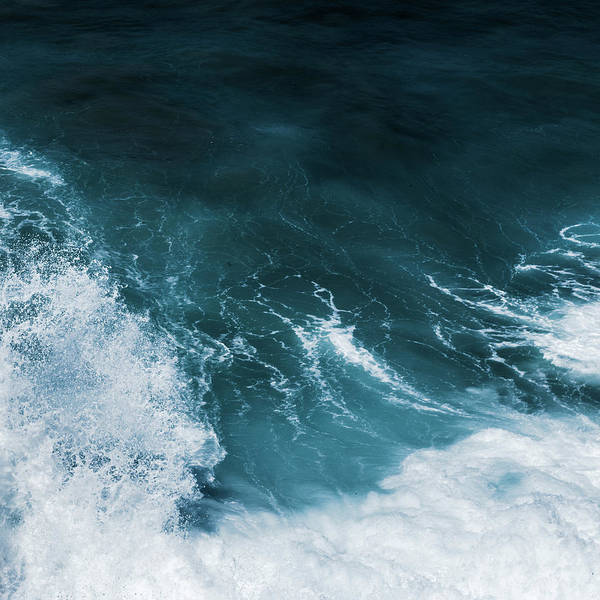 Photograph - Freedom Of The Ocean Iv by Anne Leven