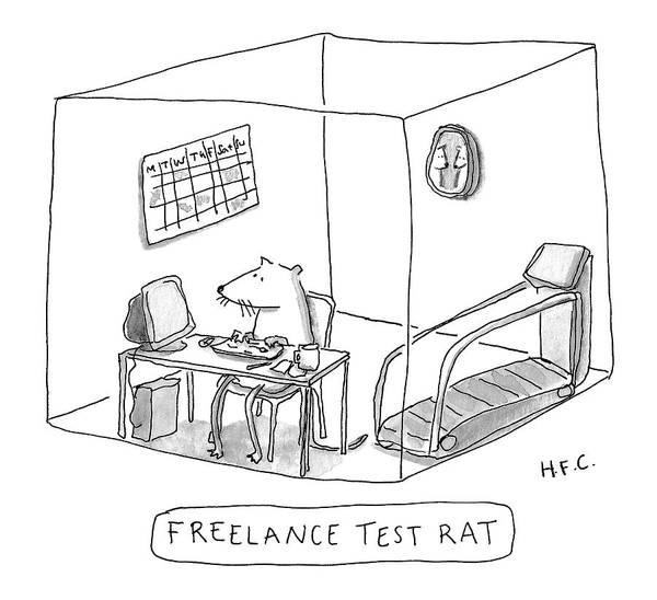 Wall Art - Drawing - Freelance Test Rat by Hilary Fitzgerald Campbell