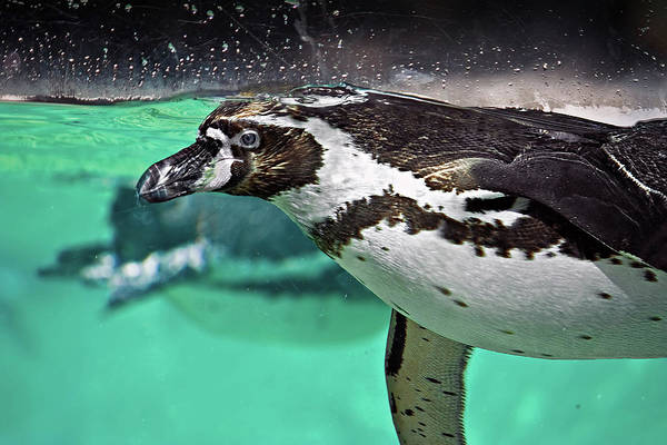 Underwater Photograph - Freestyle Swimming by Ellen Van Bodegom