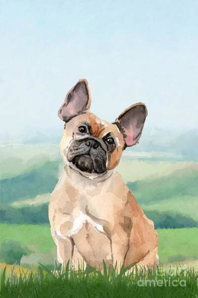 Pedigree Painting - French Bulldog by John Edwards