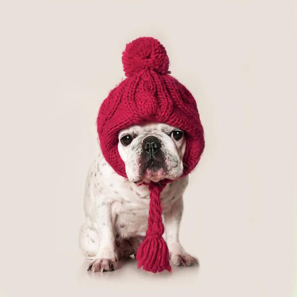 Knit Hat Photograph - French Bulldog by Retales Botijero
