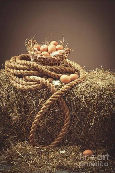 Wall Art - Photograph - Fresh Eggs In Barn by Amanda Elwell
