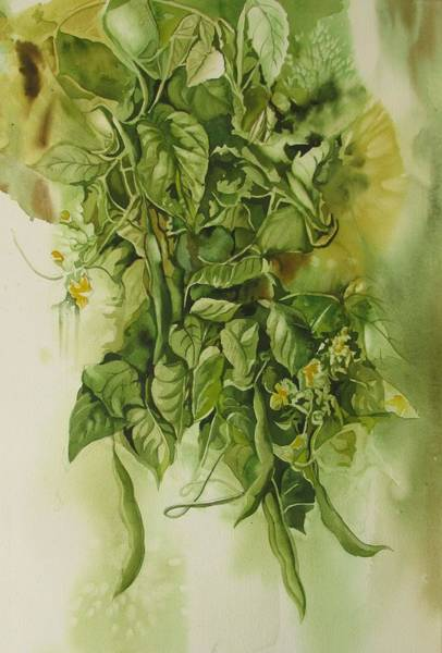 Painting - Fresh Green Beans  by Alfred Ng