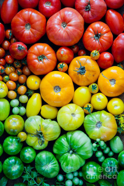 Object Wall Art - Photograph - Fresh Heirloom Tomatoes Background by Letterberry