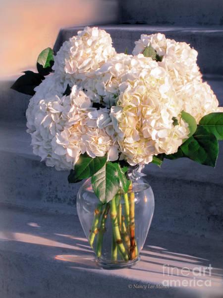 Wall Art - Photograph - Fresh Hydrangea Blooms by Nancy Lee Moran