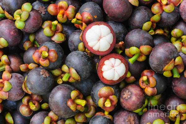 Herbal Wall Art - Photograph - Fresh Organic Mangosteen Thai Fruit In by Unchalee foto