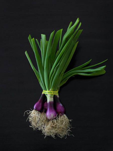 Wrap Photograph - Fresh Organic Red Spring Onions by Armstrong Studios