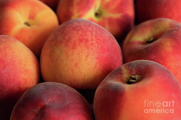 Wall Art - Photograph - Fresh Peaches by Tracy Hall