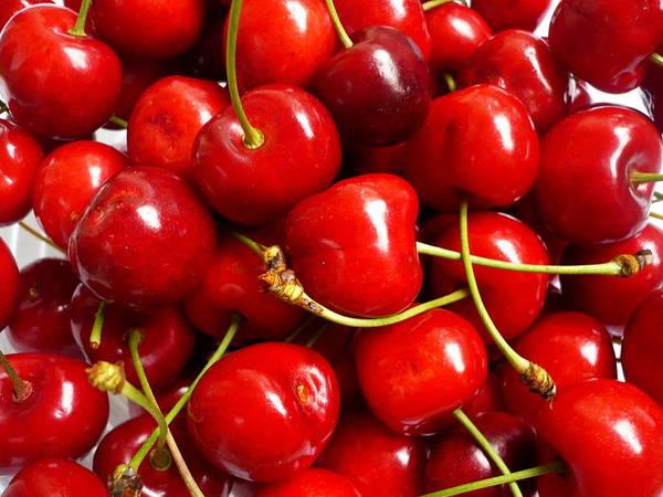 Vienna Photograph - Fresh Red Cherries by Vienna Mornings