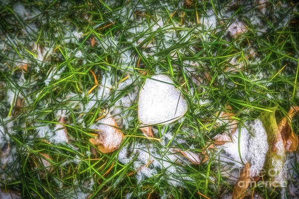 Photograph - Fresh Snow by Jon Burch Photography