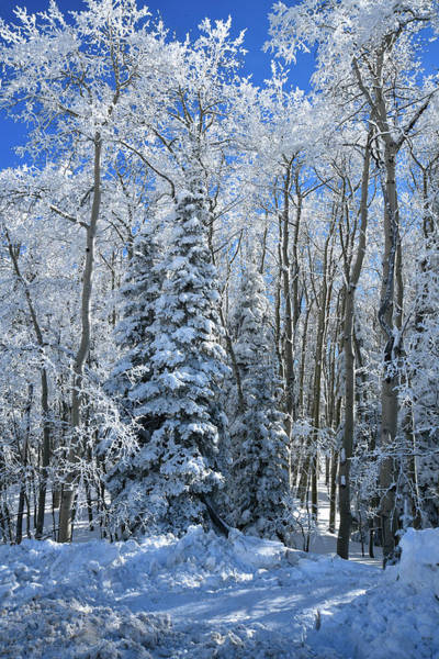 Photograph - Fresh Snow On Grand Mesa by Ray Mathis
