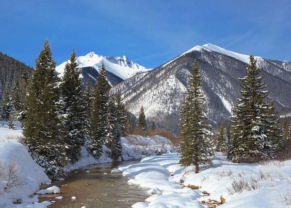 Wall Art - Photograph - Fresh Snow On Mineral Creek  by Bridget Calip